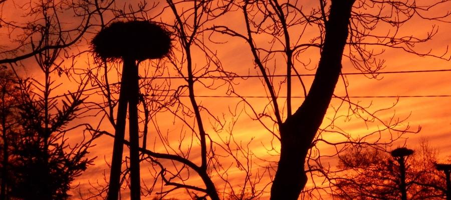 """Zachód słońca w """"bocianiej wiosce"""", czyli w Żywkowie."""