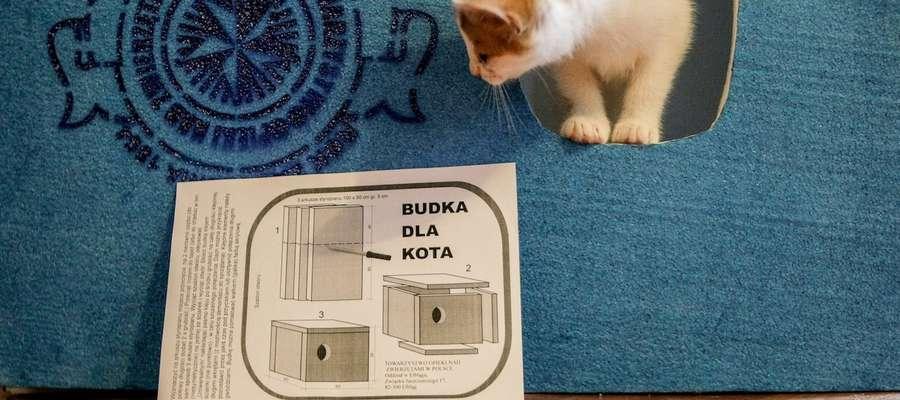 Żeby przetrwały zimę... Modelarze z MDK zrobili nowe budki dla kotów