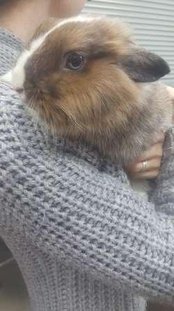 Porzucony królik