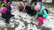 Uczniowie z Piecek dokarmiają zwierzęta zimą