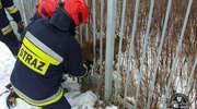 Sarna utknęła w ogrodzeniu. Nietypowa interwencja strażaków