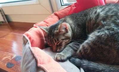 Co drugi dzień bezdomny kot w Olsztynie znajduje swój kąt