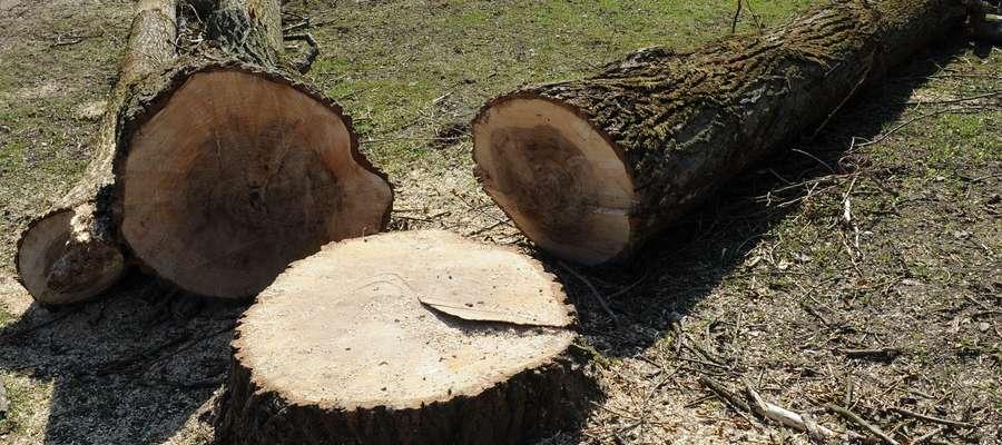 Rusza wycinka drzew przy Jagiellońskiej w Olsztynie. Uwaga na utrudnienia!
