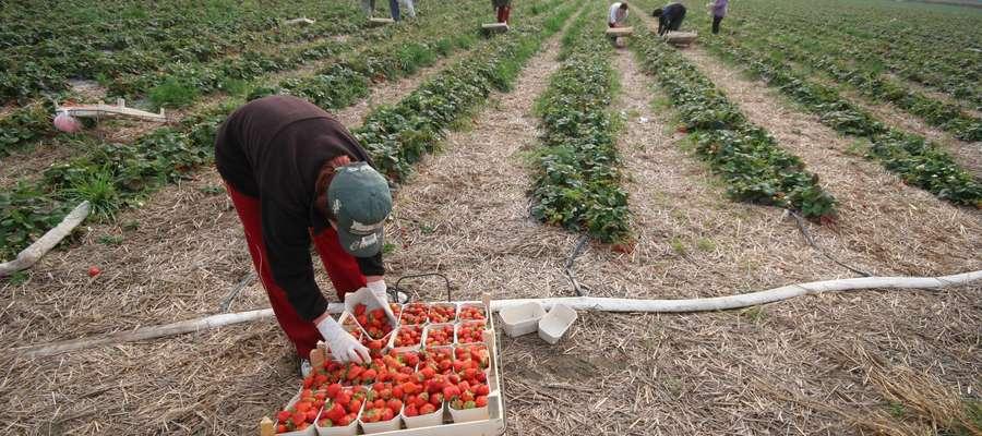 Obywatelom sześciu państw — Armenii, Białorusi, Gruzji, Mołdawii, Rosji i Ukrainy — przysługuje kilka ułatwień związanych z procedurą uzyskania zezwolenia na pracę sezonową w Polsce