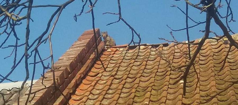 Kot uciekałprzed psami i utknąłna dachu. Na pomoc wezwano strażaków