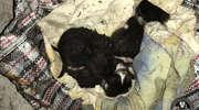 Uratowali trzy małe kotki z pożaru w garażach