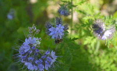 Akcja na rzecz owadów zapylających