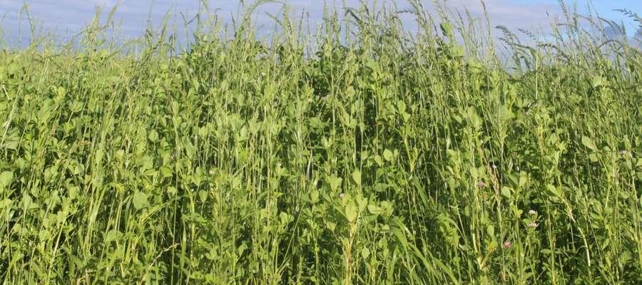 Mieszanka jednoroczna z koniczyną perską — Country 2053 Turbo — umożliwia zebranie nawet 5 pokosów w ciągu roku przy niewielkim nawożeniu azotowym. Jest doskonałym elementem płodozmianu np. w monokulturze kukurydzianej