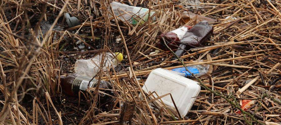 Zaśmiecone trzcinowiska na brzegu jeziora Niegocin