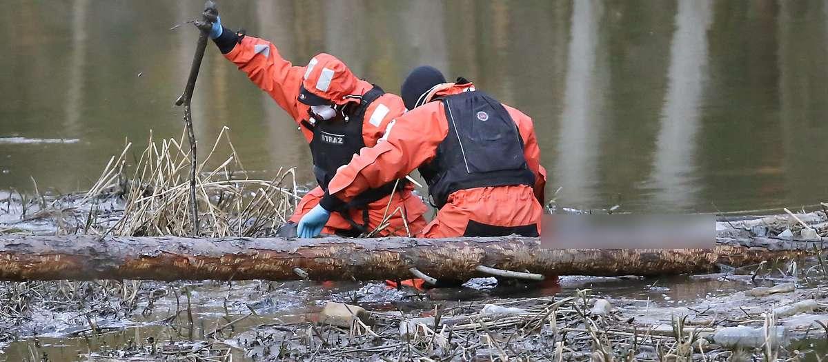 Trup w Łynie  Olsztyn-wstrząsającego odkrycia dokonało także małżeństwo, które postanowiło spędzić trochę czasu na kajakach. W pewnym momencie uwagę kobiety pływającej po Łynie zwróciły śmieci w zakolu rzeki. Kiedy przyjrzała się im bliżej, wstrząśnięta z