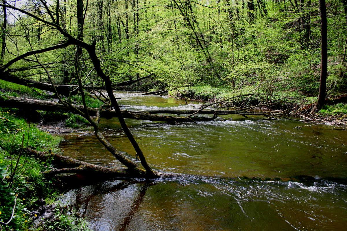 Nad wodę! Wzgórza i wody gminy Grodziczno - full image