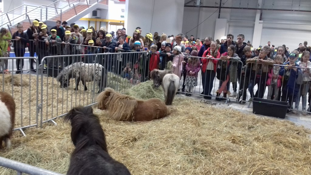 http://m.wm.pl/2018/04/orig/0000035402-animals-days-2018-zdjecie-3-459121.jpg