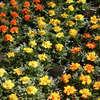 W Olsztynie trwają X Wiosenne Targi Ogrodnicze [ZDJĘCIA, VIDEO]