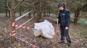 Martwe kurczęta upchnięte w worki zostały wyrzucone w podolsztyńskim lesie [ZDJĘCIA]
