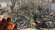 """Na bartoszyckim """"Kwadracie"""" nie ma już ani jednego drzewa"""