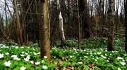 Zdjęcie Tygodnia. Wiosna w lesie koło Bisztynka