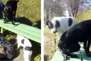 """Ktoś zostawił psy przywiązane do przystanku. """"Ile trzeba mieć w sobie nienawiści?"""" [film]"""
