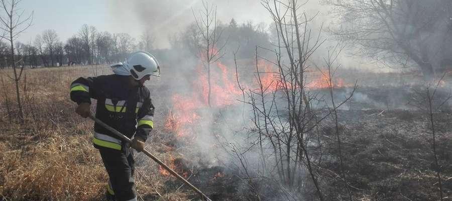 Strażacy walczą z rozprzestrzeniającym się pożarem traw w miejscowości Sztynort Duży