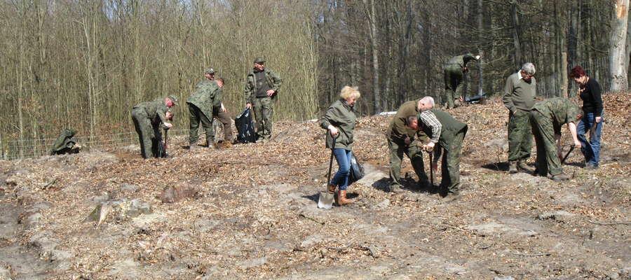 Nadleśnictwo Dobrocin posadzi w tym roku 271 tysięcy drzew