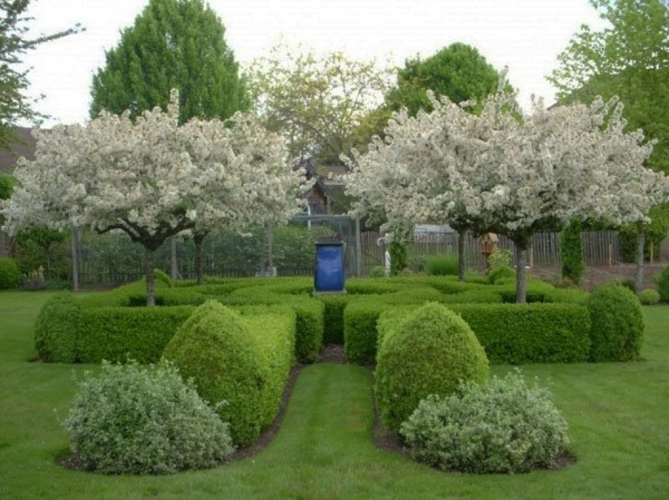 Jakie Drzewa Wybrać Do Małego Ogrodu Brico Marche Radzi Iława