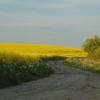 Zdjęcie Tygodnia. Krajobraz z kwitnącym rzepakiem w Sędławkach