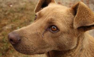Przywiązał psa do torów i zostawił na pewną śmierć. Sąd odwoławczy zaostrzył karę