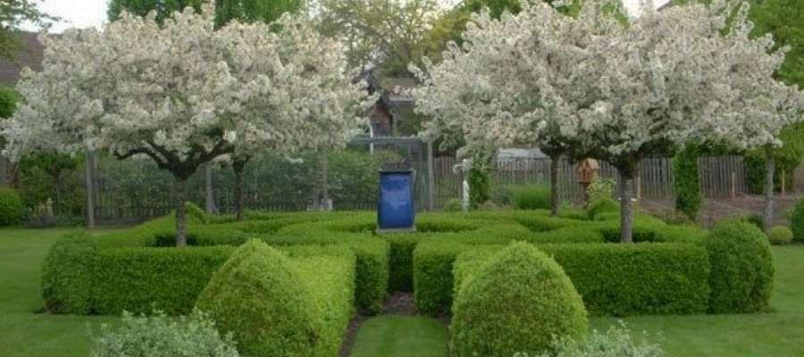 Jakie drzewa wybrać do małego ogrodu?