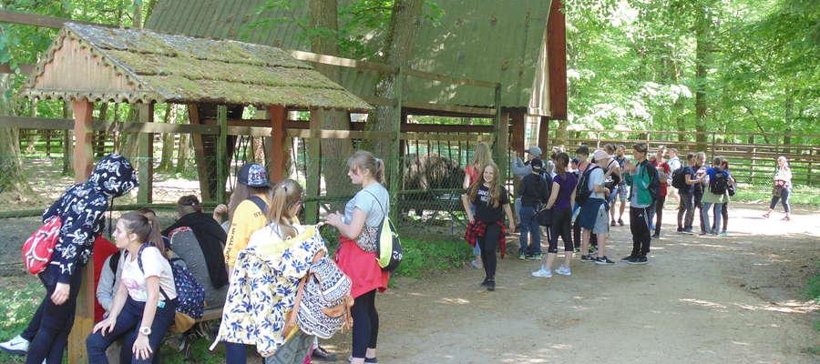 Uczniowie mieli możliwość zobaczyć z bliska potężne żubry
