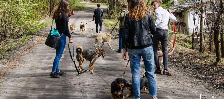 Wolontariusze podczas wyprowadzania psów ze schroniska