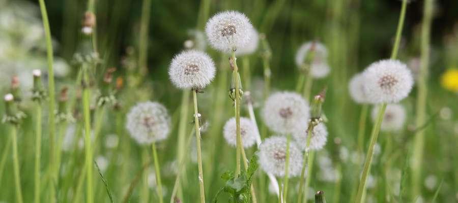 Kwiaty wiosna  Olsztyn-kwiaty na wiosnę
