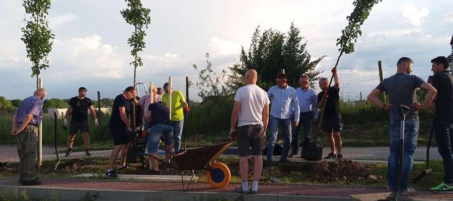 Ulica Marcina Antonowicza zazieleniła się gruszami