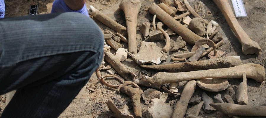 Te kości zostały zebrane w ciągu zaledwie około 30 minut na hałdzie ziemi leżącej na Placu Konstytucji 3 Maja w Bartoszycach.