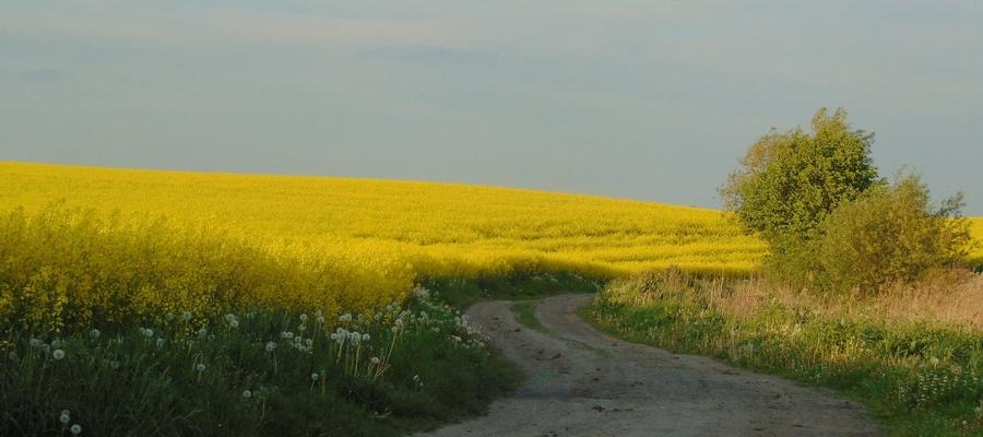 Krajobraz w Sędławkach