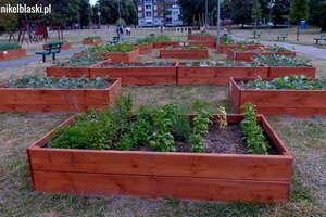 Ogródek w... parku na Mickiewicza. Każdy może z niego korzystać [zdjęcia]