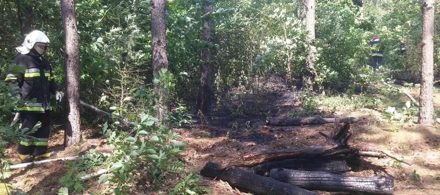 Pożar ściółki leśnej i trawy