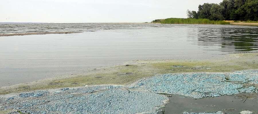 Zielona woda w Zalewie Wiślanym. Stanowczo odradzają kąpiel [zdjęcia]