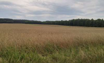 Czy w gminie Janowo powstaną fermy drobiu i wiatraki?