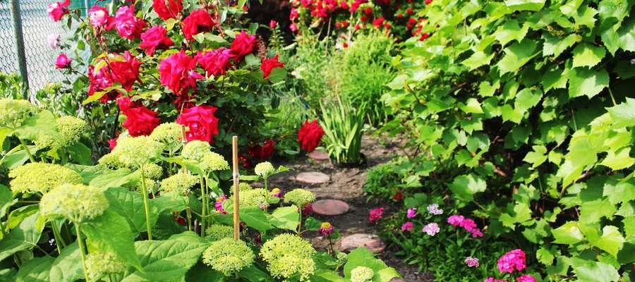 Ogród Elżbiety Wojszel