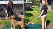 Schronisko apeluje o pomoc dla zwierząt w czasie upałów