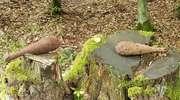 Granaty z II wojny światowej leżały na pniu!