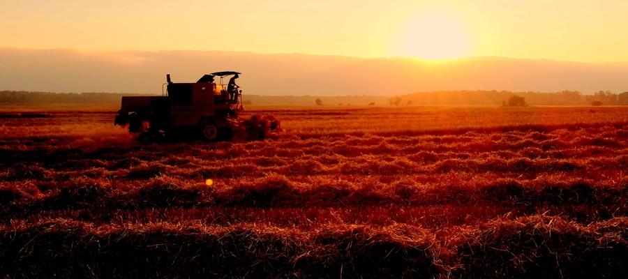 Żniwa o zachodzie słońca w Lipicy.