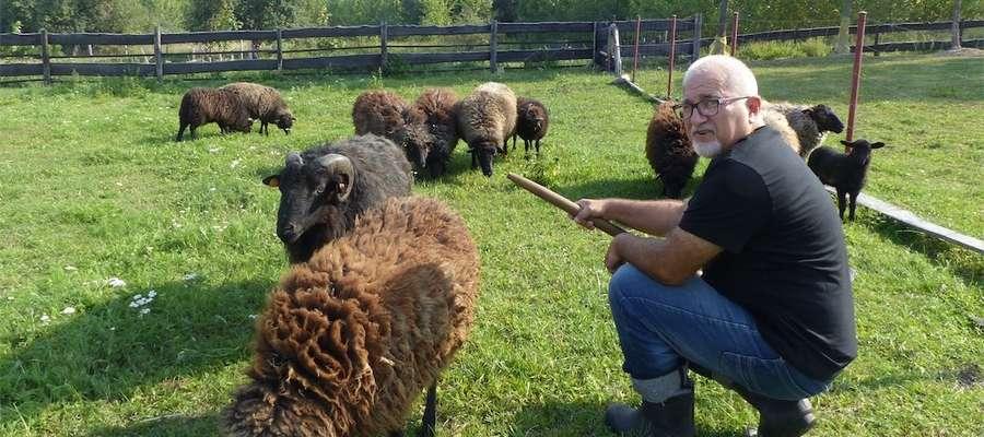 Marzyłem o alpakach, ale na to mnie nie stać. Owce to trochę substytut, ale niezwykle wdzięczny - mówi Maciej Rygielski