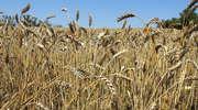 Trudny rok dla rolników. Ponad 700 gospodarstw w powiecie dotkniętych klęską