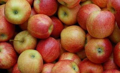 Po raz pierwszy w Lubawie Regionalne Święto Jabłka - zapraszamy!