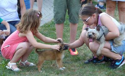 Zaczipuj swojego psa - całkowicie za darmo