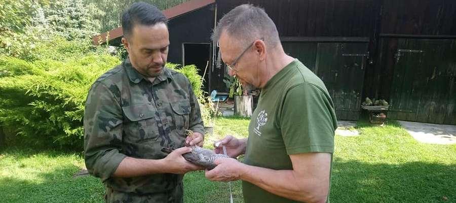 Na zdjęciu krogulec już w rękach strażnika leśnego i pracownika ośrodka w Jerzwałdzie