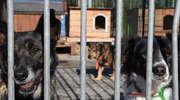 Iławskie schronisko świętuje, ale też czeka na adopcje kolejnych psiaków i kotów [ZDJĘCIA]