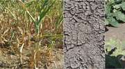 Przedłużony termin składania wniosków suszowych