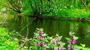 Spływ kajakowy połączony ze sprzątaniem rzeki Wel