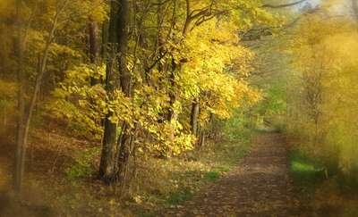 Złota polska jesień zachwyca swoim pięknem.  Do kiedy będzie nam towarzyszyć słoneczna pogoda?